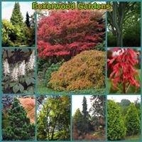 boxerwood-gardens-gardens--arboretums-in-va