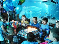 Swim On Over To Our List Of Aquarium Parties In Virginia Beach These Are Great For All Ages Birthday Full Fun And Just A