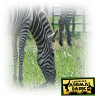 leesburg-animal-park-animal-party-entertainment-services-in-virginia