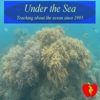 under-the-sea-animal-party-entertainment-services-in-virginia