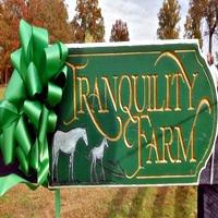 Tranquility Farm Equestrian Horseback Riding in Virginia